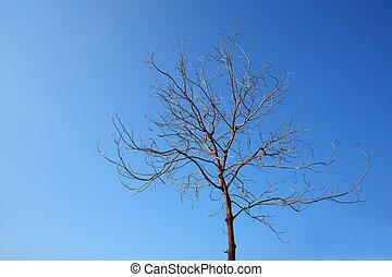 青い空, 木, 死んだ