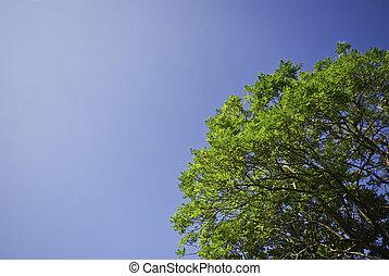 青い空, 木, 緑