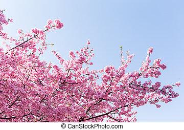 青い空, 木, sakura