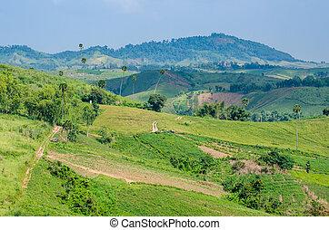 青い空, 緑の丘