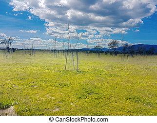 青い空, 緑の採草地
