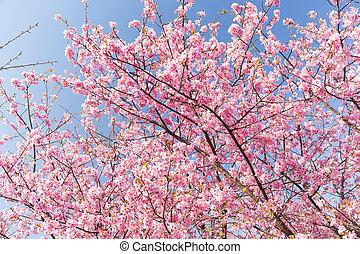 青い空, sakura