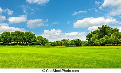 青い背景, 木, sky.great, 緑のフィールド, 旗