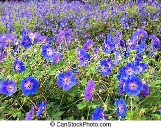 青い背景, 美しい, 花