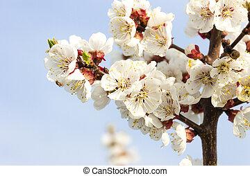 青い花, 木, 空, ブランチ, 春