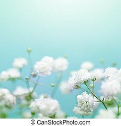 青い花, 焦点を合わせなさい。, バックグラウンド。, 白, 柔らかい