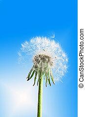 青い花, 空, タンポポ