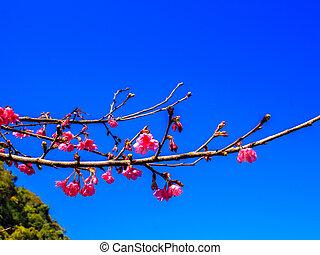 青い花, 空, sakura