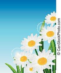 青い花, 自然, 春, 空, 背景, デイジー