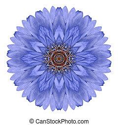 青い花, 隔離された, 菊, 背景, 白, mandala, 万華鏡