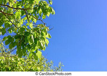 青緑, 葉, 空