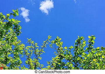 青緑, 葉, 空, 下に
