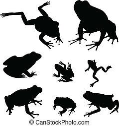 青蛙, 黑色半面畫像
