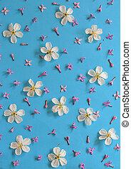 青, さくらんぼ, 白い背景, 花