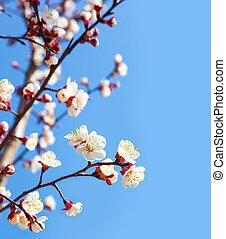 青, さくらんぼ, 花, 木, 空