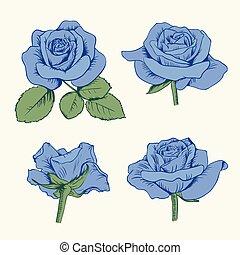 青, セット, ばら, 葉, 隔離された, コレクション, バックグラウンド。, ベクトル, イラスト, 白