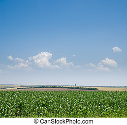 青, トウモロコシ, 空, 海原, フィールド, 緑, 下に