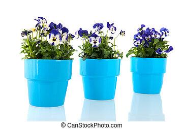 青, パンジー, 花