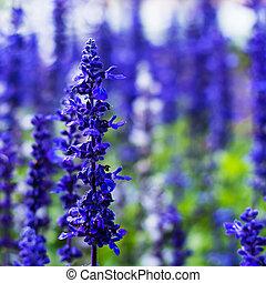青, ヒエンソウ, ろうそく, 流れ, 多数, 紫色, 美しい