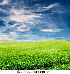 青, フィールド, 上に, 空, 曇り