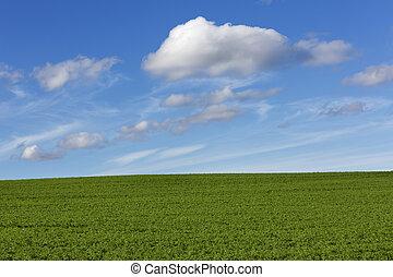 青, フィールド, 空, 緑, 曇り
