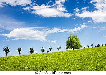 青, フィールド, 緑, に対して, 空