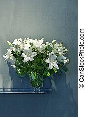 青, ユリ, 花のつぼ, 背景, 白