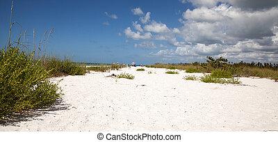 青, 上に, 空, 砂, 緑の白, 草, 浜, tigertail