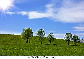 青, 丘, 草, 空, 木