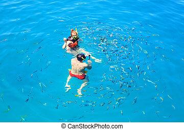 青, 供給, 観光客, 明確な 水, 海, tropic, snorkeling