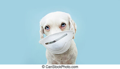 青, 保護である, 隔離された, 身に着けていること, 顔, 犬, バックグラウンド。, mask., 子犬