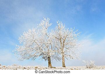 青, 凍らせられた, 空, 2, 木, 風景, 光景