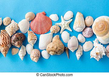 青, 別, 背景, 海の貝