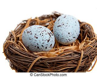 青, 卵, 2, nest-decoration, ロビンズ