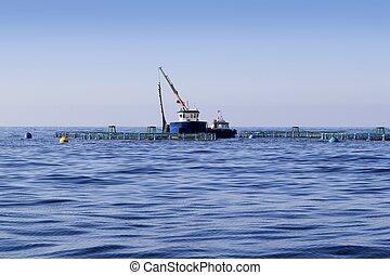 青, 地平線, 農場, fish, 海洋, 海