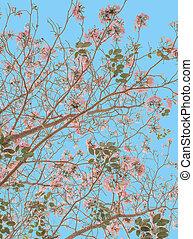青, 型, 空, 効果, 背景, sakura