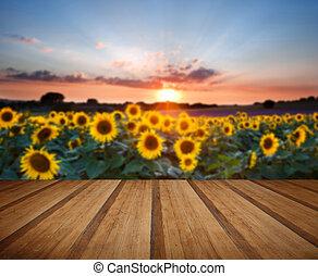 青, 夏, ひまわり, 床, 木製である, 日没, 風景, 板, 空