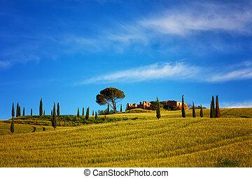 青, 夏, トスカーナ, 家, 下に, 空, 明るい, フィールド, 農夫, 糸杉, 風景