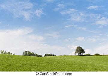 青, 夏, 牧草地, 空, いくつか, 木, horizont, 緑, 曇り, 美しい, 日