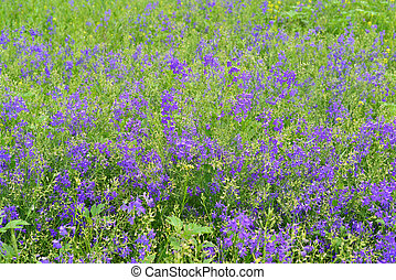 青, 夏, 野生の花, 牧草地