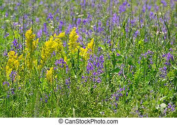 青, 夏, 野生の花, 牧草地, 黄色