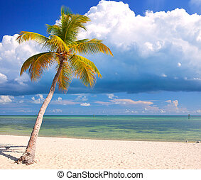 青, 夏, 雲, 空, アメリカ, フロリダ, ゆとり, 木, 水, キー, 海洋, トロピカル, 水晶, やし,...