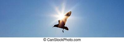 青, 太陽, 飛行, 空, 前部, 鳥