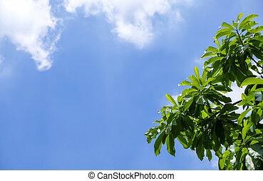 青, 庭, 木, 葉, 空, 緑の背景