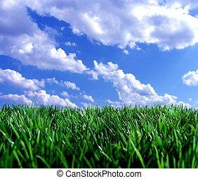 青, 新たに, 空, 緑, gras