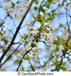 青, 春の花, 背景