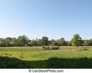 青, 春, 木, 木, フィールド, 緑の草, 落ちている, 日, 空