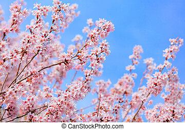 青, 晴れわたった空, sakura