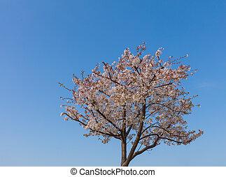 青, 木, 空, sakura, に対して