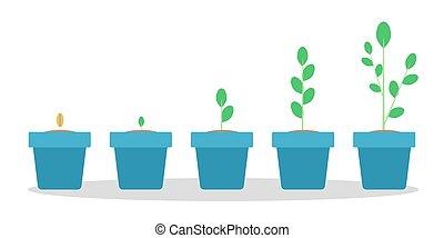 青, 植物の 鍋, 成長, 緑, 段階